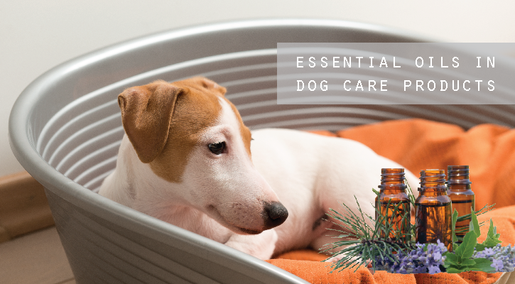 Are essential oils safe for my dog?
