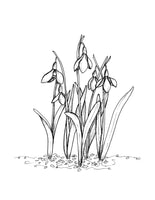 Illustrated wall art design of snowdrop flowers in black and white