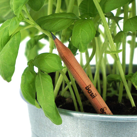 WHEN THESE PENCILS ARE TOO SHORT TO USE, PLANT THEM TO GROW HERBS