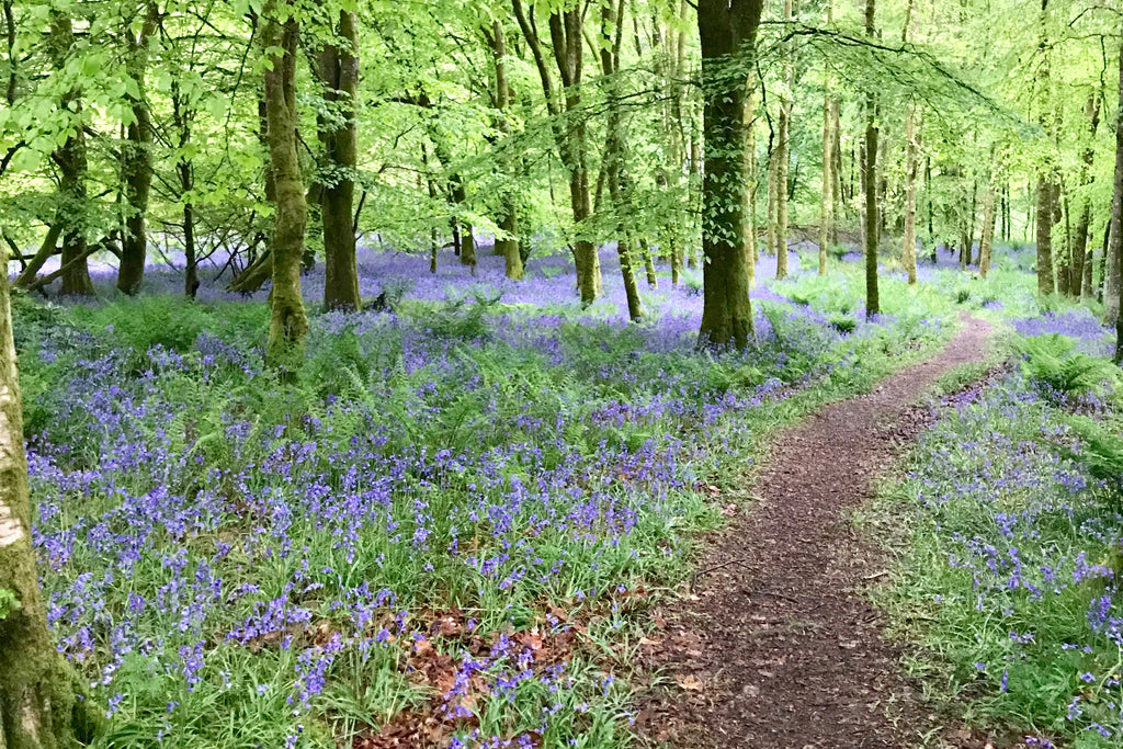 Stunning Bluebell Walks in Wales - with Pubs!