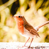 Why you should feed garden birds in the Summer not just Winter