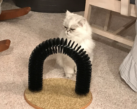 Self Grooming Archway For Your Cat