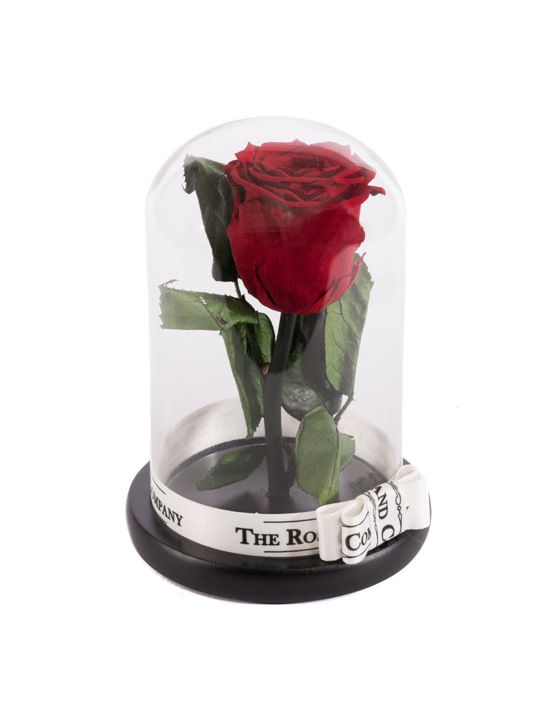 As seen in beauty and the beast eternity rose under the dome the as seen in beauty and the beast eternity rose under the dome izmirmasajfo