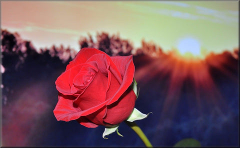 RED ROSE SUNSET BEAUTIFUL CANVAS WALL HANGING IMAGE PHOTO RED SUN WALL ART