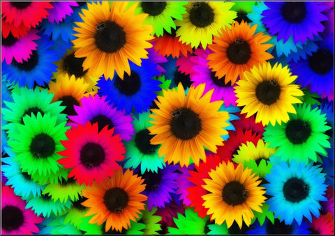 RAINBOW SUNFLOWERS MULTI COLOURED CANVAS WALL ART IMAGE PICTURE RED BLUE YELLOW