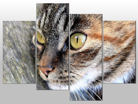 CAT CLOSE UP TABBY ANIMAL CUTE LARGE SPLIT PANEL 4 PANEL CANVAS WALL ART IMAGE