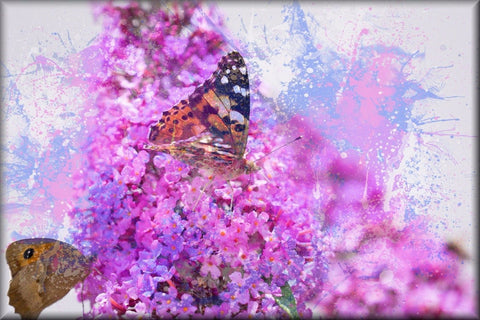 PURPLE PINK BUTTERFLY FLOWERS PAINT SPLASH CANVAS WALL HANGING PICTURE IMAGE