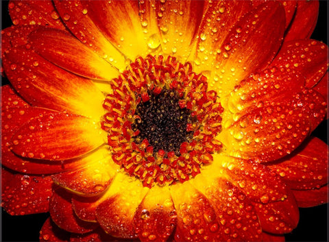 FLOWER RED ORANGE YELLOW FLORAL IMAGE ART CANVAS WALL HANGING IMAGE ART IMAGE
