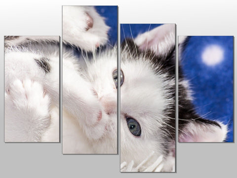 CA KITTEN BLACK AND WHITE CUTE LARGE SPLIT PANEL 4 PANEL CANVAS WALL ART IMAGE