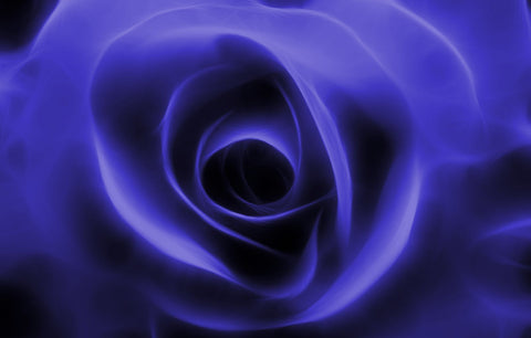 BLUE FRACTAL ROSE FLORAL CANVAS WALL HANGING IMAGE PHOTO BLUE ROSE