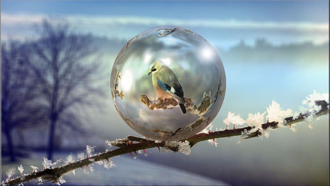 BIRD TREE BRANCH FROST BUBBLE NATURE FINCH CANVAS WALL ART IMAGE PICTURE LARGE