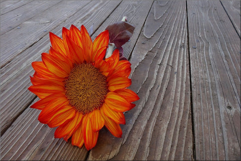 ORANGE YELLOW FLOWER CANVAS WALL HANGING PICTURE IMAGE PHOTO NATURE