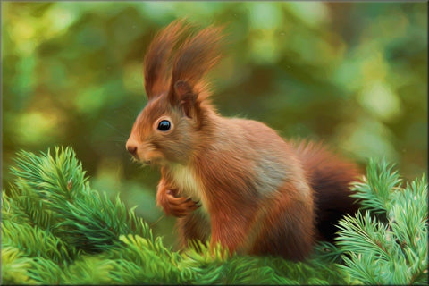 RED SQUIRREL PAINTING CANVAS WALL HANGING PICTURE IMAGE WILDLIFE NATURE RED