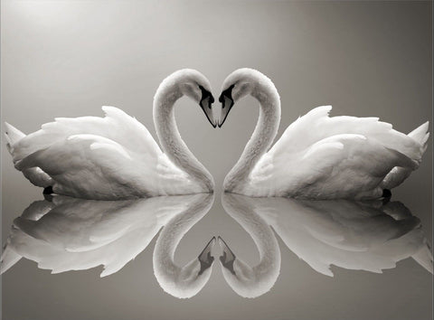 SWAN LOVE HEART WATER CANVAS WALL ART IMAGE HANGING PHOTO ANIMALS BIRDS