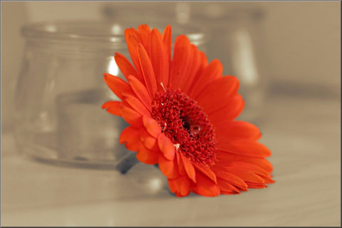 GERBERA ORANGE FLOWER FLORAL NATURE CANVAS WALL ART IMAGE PICTURE LARGE