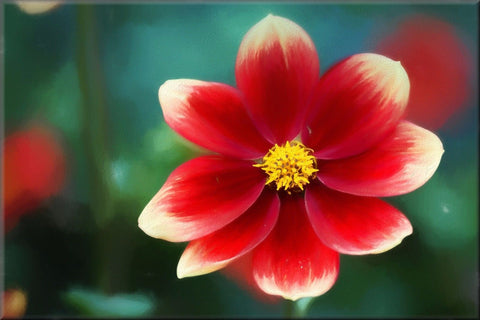 RED WHITE FLOWER CANVAS WALL HANGING PICTURE IMAGE PHOTO NATURE PAINTING