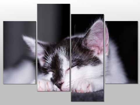 CAT KITTEN BLACK AND WHITE SLEEP LARGE SPLIT PANEL 4 PANEL CANVAS WALL ART IMAGE