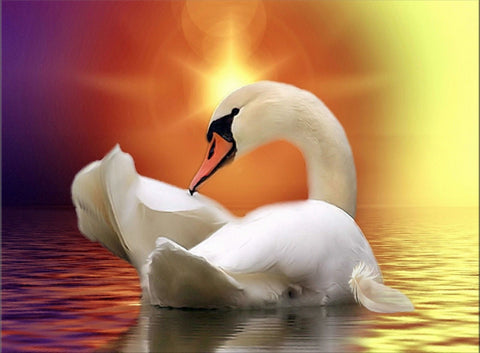 SWAN RAINBOW SKY SUNSET CANVAS WALL ART IMAGE HANGING PHOTO ANIMALS BIRDS