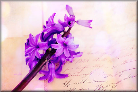 PURPLE HYACINTHS FLOWER CANVAS WALL HANGING IMAGE PHOTO NATURE FLOWERS PURPLE