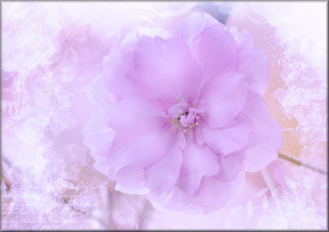 LILAC WHITE FLOWER CANVAS WALL HANGING PICTURE IMAGE PHOTO NATURE PINK