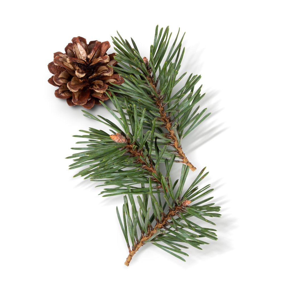 Evergreen Forerst (2-Pack)