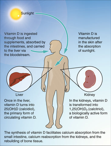 how vitamin d is converted in our bodies
