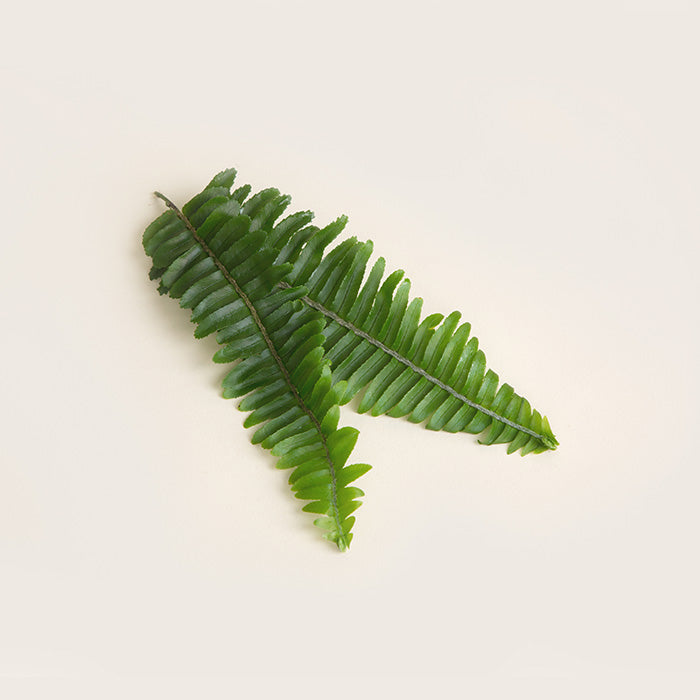 POLYPODIUM LEUCOTOMOS EXTRACT