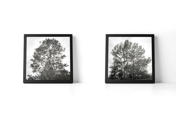 Majestic Trees Set of 2 Art Print Decor - Pine Lane Designs
