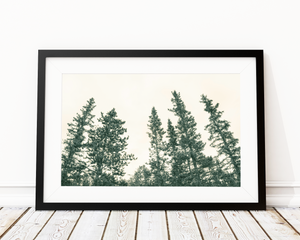 Tall Pines Art Print Decor - Pine Lane Designs