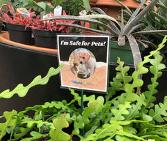 pet safe plant sign to help you pick safe houseplants for you and your pet