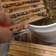 Scoop Mason Bee Cocoon Harvest