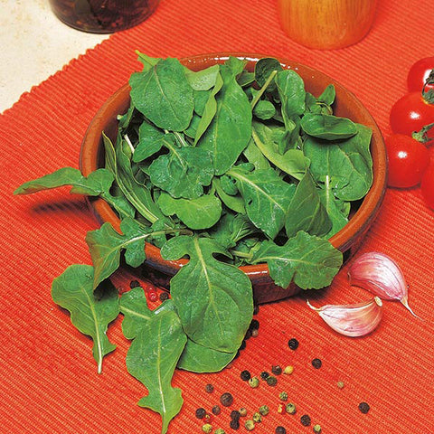 Arugula Cultivated - Mr. Fothergill`s Seeds