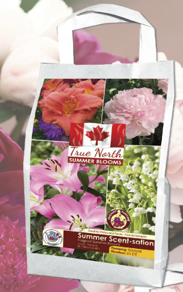 True North Summer Scent-sation white and pink spring bulbs