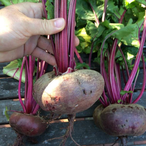 Beet Flat of Egypt - Good Earth Farms