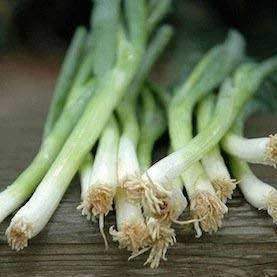 Scallion White Lisbon - Cornucopia Seeds
