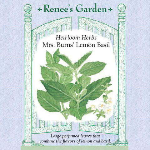 Basil Mrs. Burns' Lemon - Renee's Garden