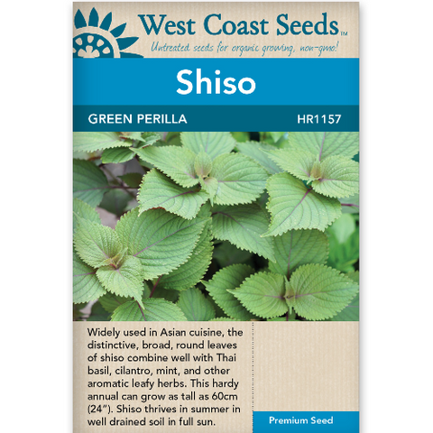 Shiso Green Perilla - West Coast Seeds