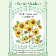 Sunflower Sundancer - Renee's Garden