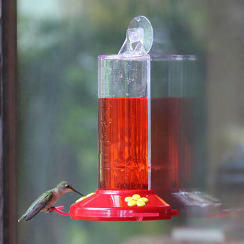 Hummingbird Feeder Window Mounted