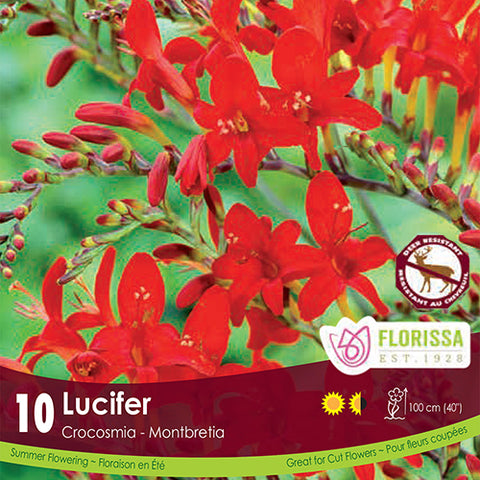 Crocosmia Lucifer - Bonus Pack