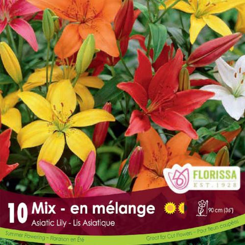 Lily Asiatic Mix - Bonus Pack