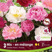 Peony Mix Pink and White spring bulbs