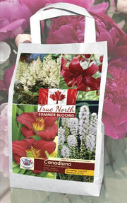True North Canadiana spring bulb white and red
