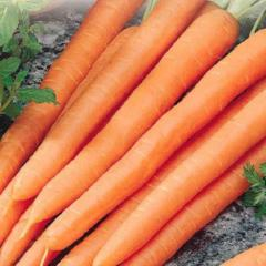 Carrot Red Cored Danvers - McKenzie Seeds