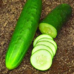 Cucumber Straight Eight - McKenzie Seeds