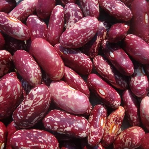 Bean King of the Early - Metchosin Farm