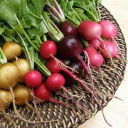 Radishes Mix Garden Party - Renee's Garden