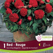 Begonia Non-Stop Red Spring Bulb