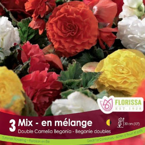 Begonia Double Camelia Mixed