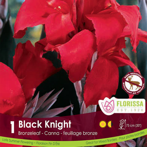 Canna Bronze Black Knight